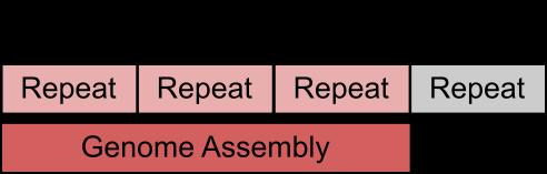 repeat_alignment